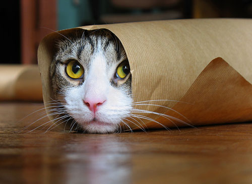 Kitty paper roll